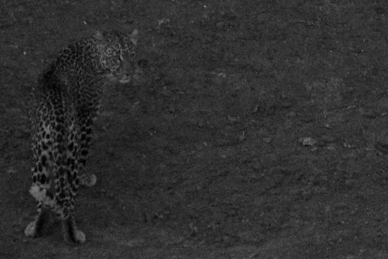 Kenya.Card1.02.2014 192