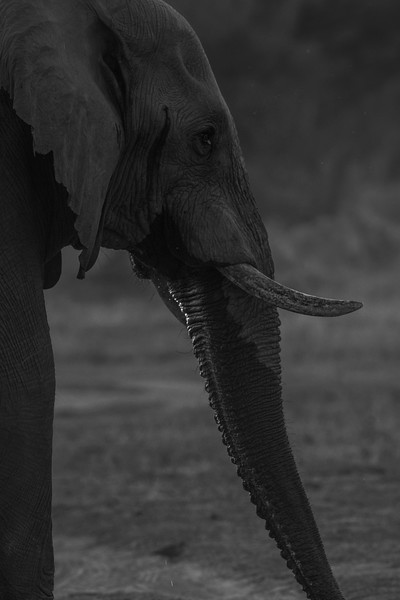 Botswana_June_2017 (2191 of 6179).jpg