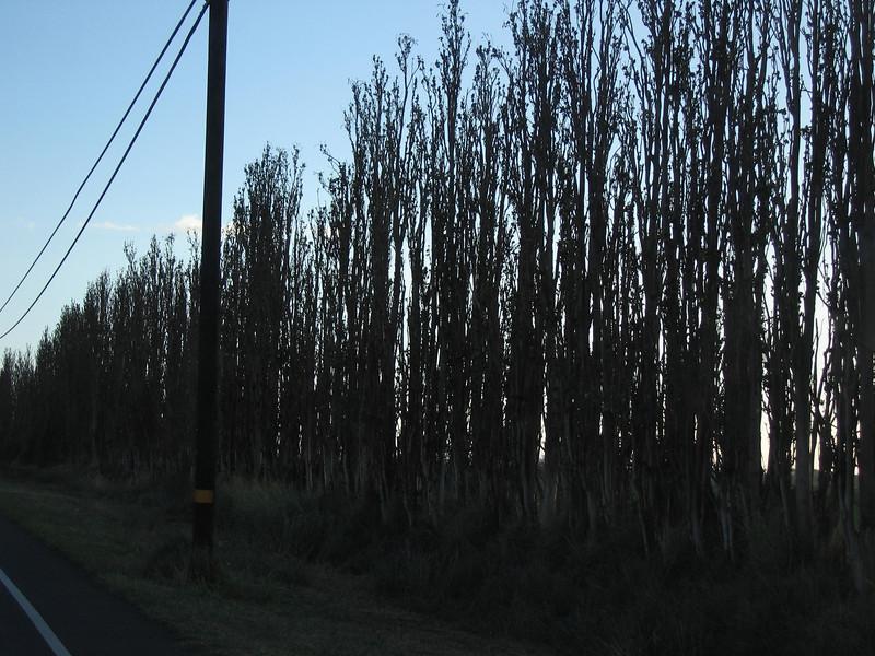 20060117_008528.JPG