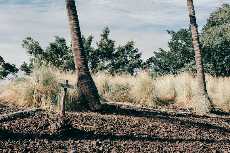 Hawaii20-65.jpg