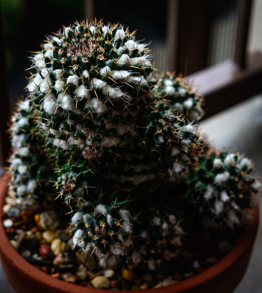Succulent-0511.jpg
