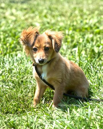 MHF Pups 8-10-18