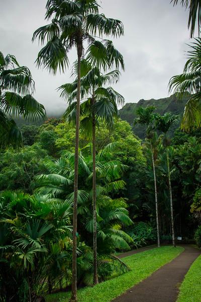 Hawaii-210.jpg