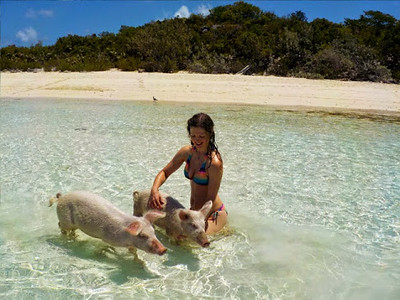 bahamas-swimming-pigs7.jpg