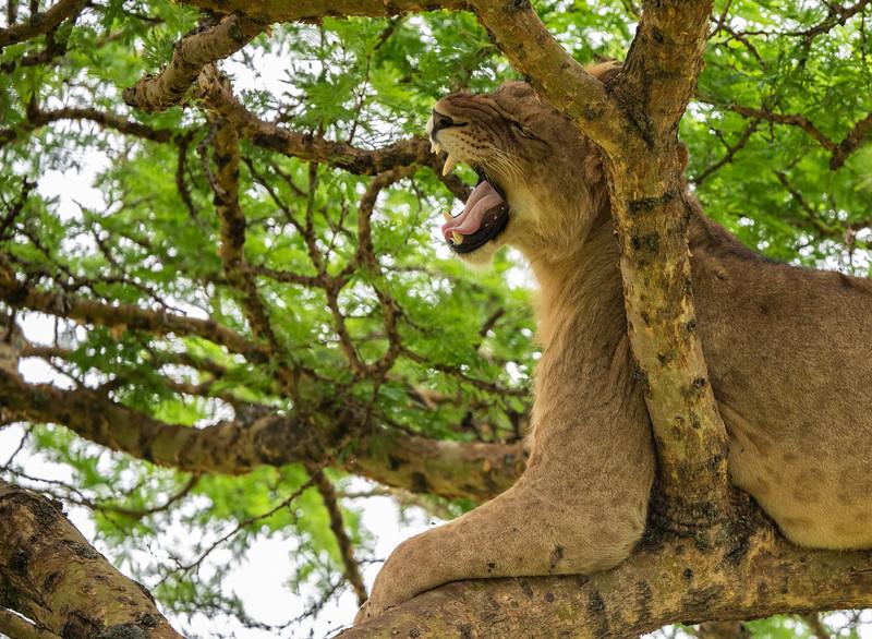 Uganda_T_QE-1075.jpg