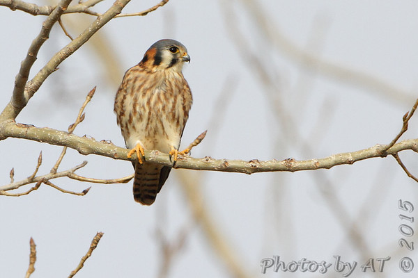2015-12-10 Riverlands Migratory Bird Sanctuary