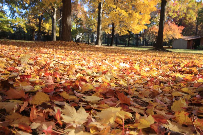 Fall 2007 063.JPG
