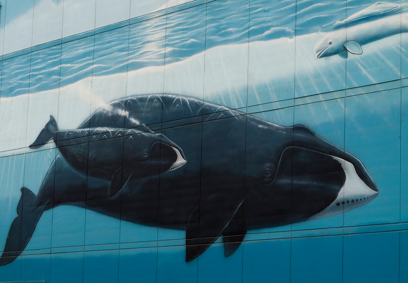 A mural on a building wall in Anchorage Alaska depicting a mother whale with her baby. Dolphins in the background.