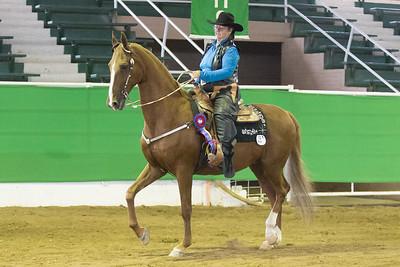 175 - Reg. American Saddlebred Country Western Pleasure Stake