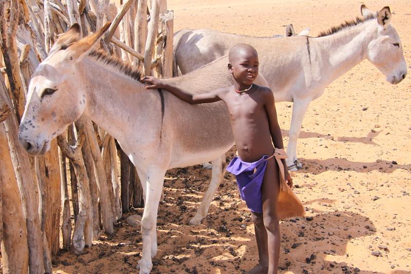 Himba donkey