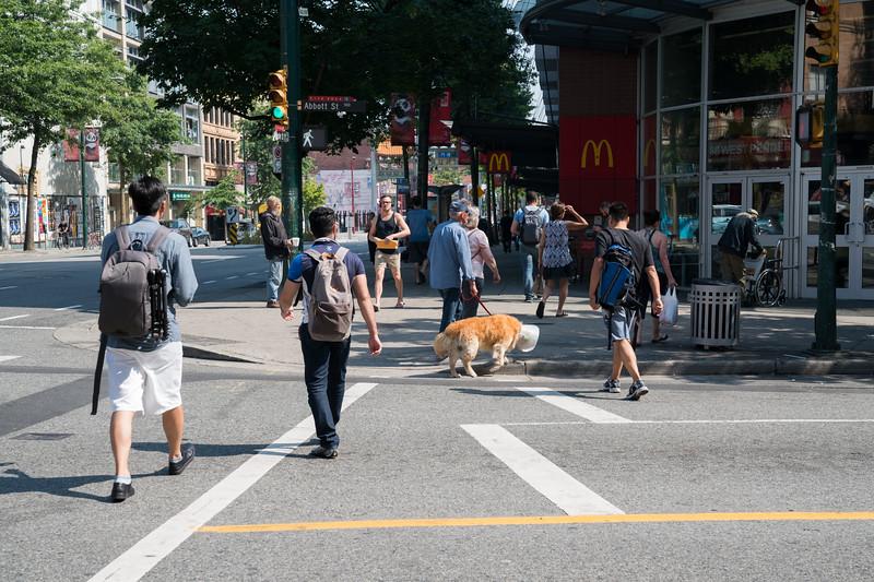 Dogs-32.jpg