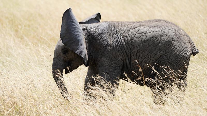 safari-2018-156.jpg