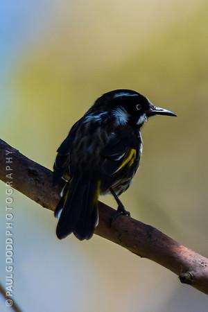 Peter Murrell Reserve, Tasmania, Feb 2013