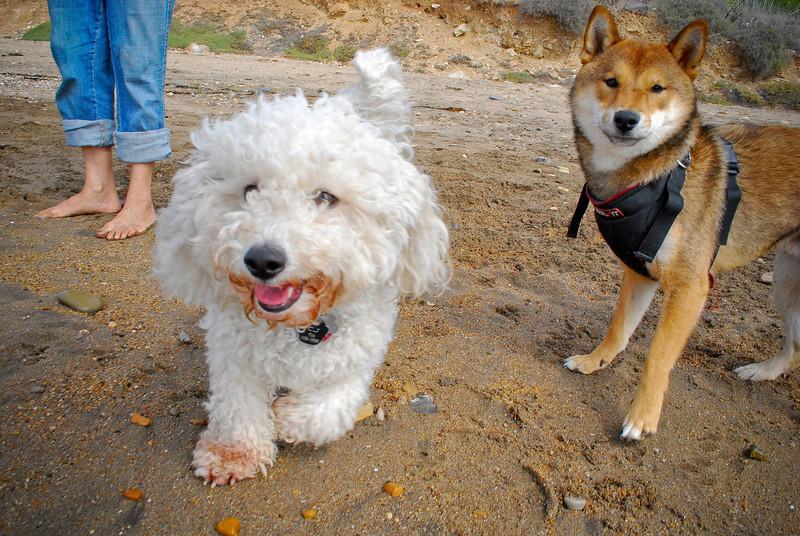 dogs_beach-054.jpg