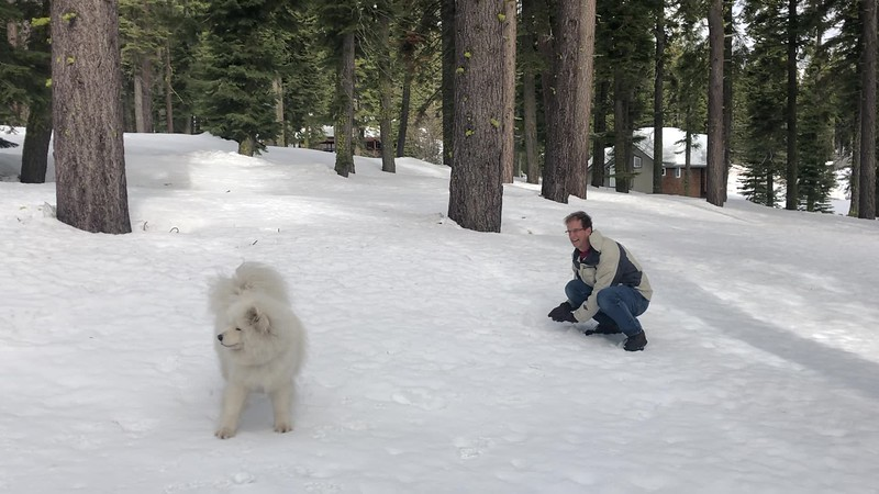 2019-03-21-0014-Trip to Tahoe with Dogs-Lake Tahoe-Curtis-Teddy the Dog-Leo the Dog.mov