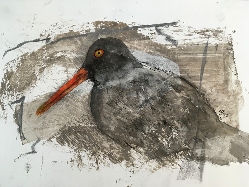 1/17 black oystercatcher over pumice/gesso/walnut oil prepared paper (watercolor). I wanted to give it a transparent look because of the texture of the paper, the orange bill adding the 'pop'