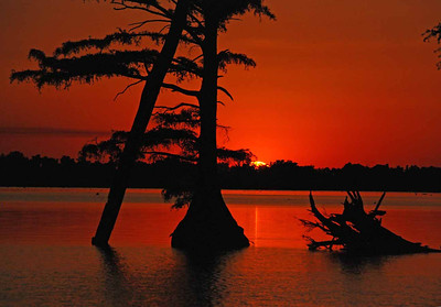 Reelfoot lake