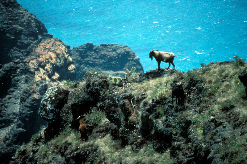 """""""...along na pali coast; photo i believe is [by] dave boynton showing goat damage."""" (BHG/20120307) PhotoID: bhg002277"""