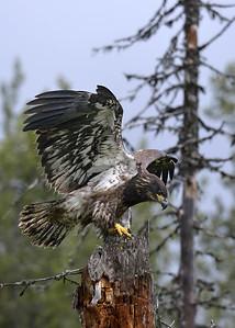 2013 Alaska