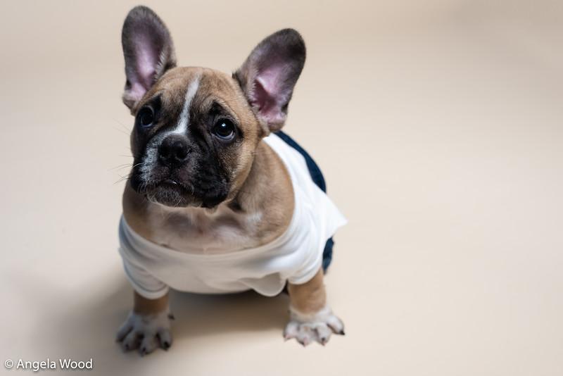 Puppies9.jpg