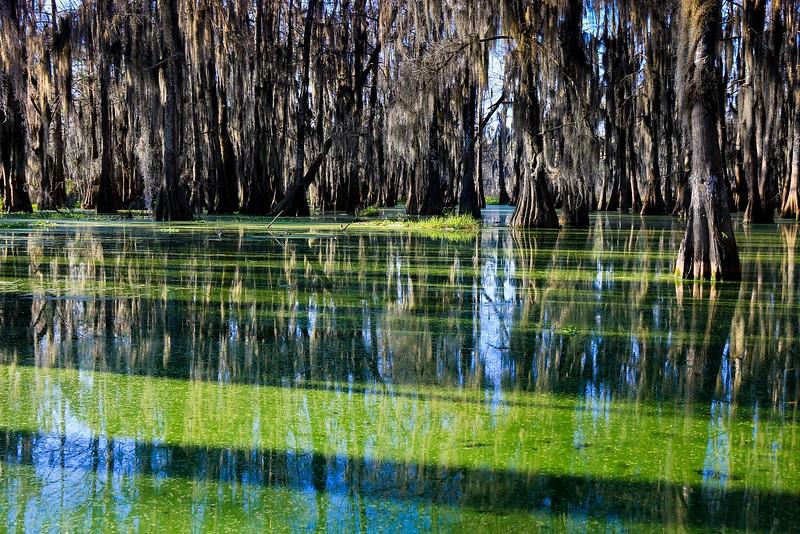 Lake Martin, La. T6i, 18-200 lens, 256B-small.jpg
