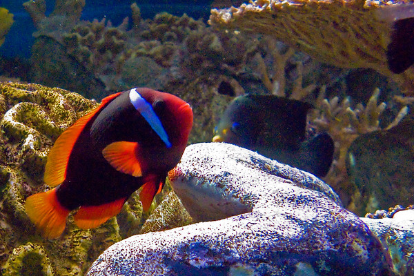 New England Aquarium, Boston MA