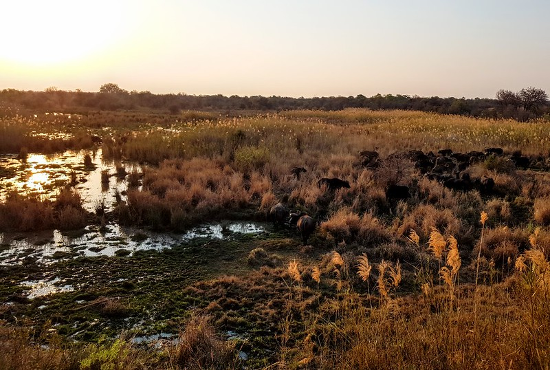 Dinokeng Reserve