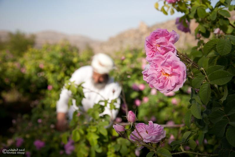 Roses Water (80)-Aljabal Alakhdhar-Oman.jpg
