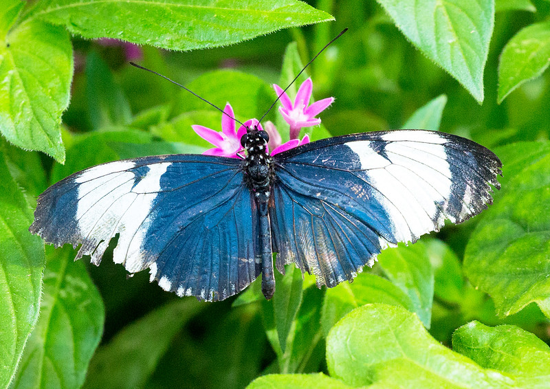 Another butterfly whom I could not identify