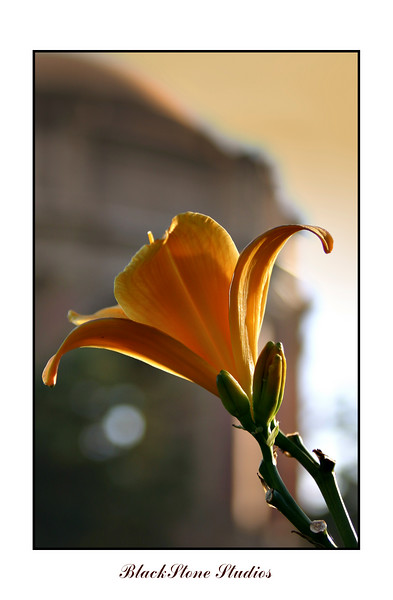 orange lily palace of fine arts-2-1.jpg