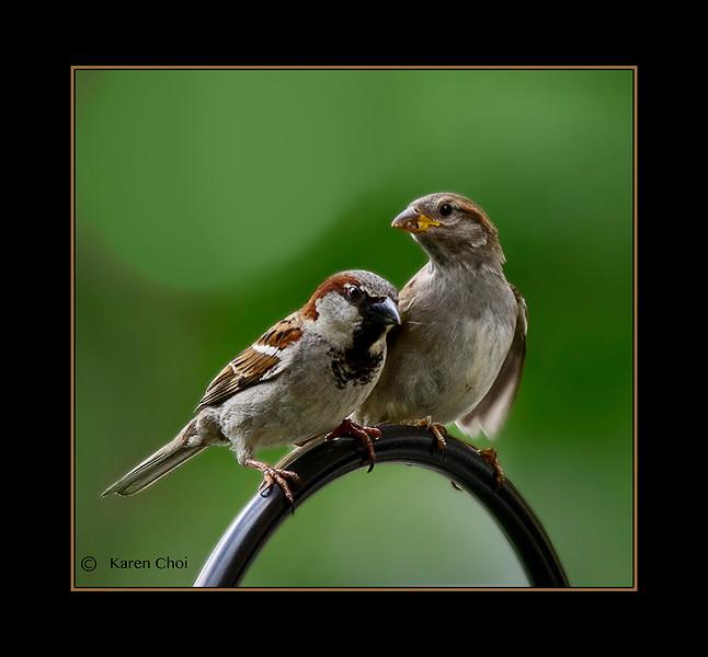 sm 2 birds.jpg