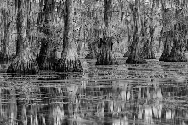 Caddo Lake BW