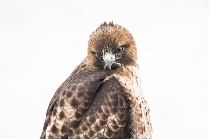 Sierra Hawks Winter 2018-9.jpg