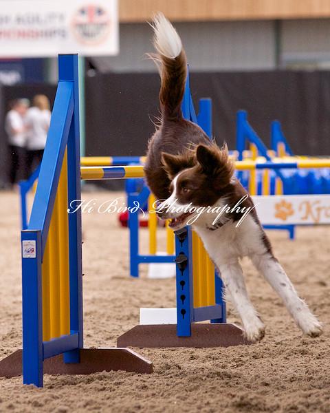 Large dog jumping  1086.jpg