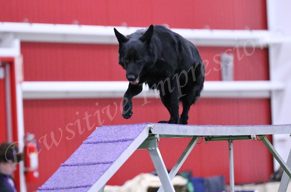 GSDCA Specialty National Novice Standard/JWW Monday 10 12 15