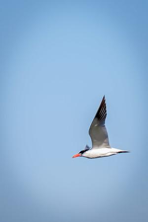 Discovery Park Birding