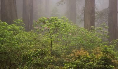 Redwood2013