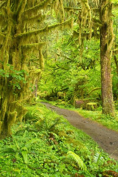 Hoh Rain Forest 2
