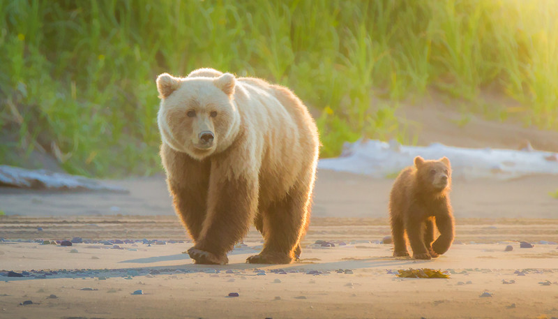 2015-07-18_Bears_Canon7D_7021-Edit-3.jpg