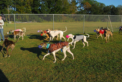 GPASA Greyhound Playdate 16DEC07