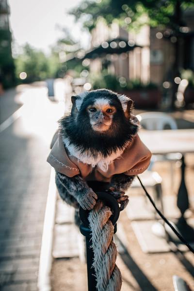 Dale Jr Monkey.jpg