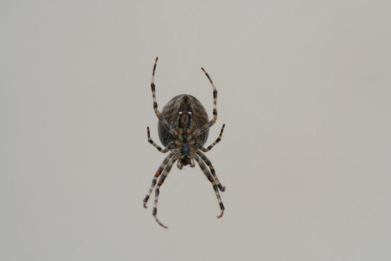 9118 Spider.JPG