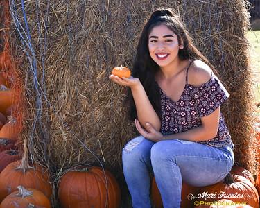 Meadow Pumpkin Patch