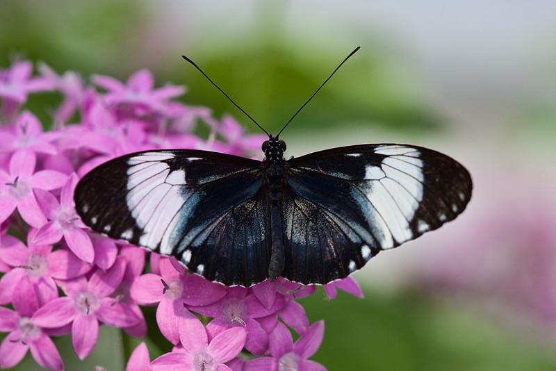 butterfly-2_3801606612_o.jpg