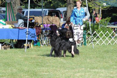 Friday Junior Showmanship: In The Ring