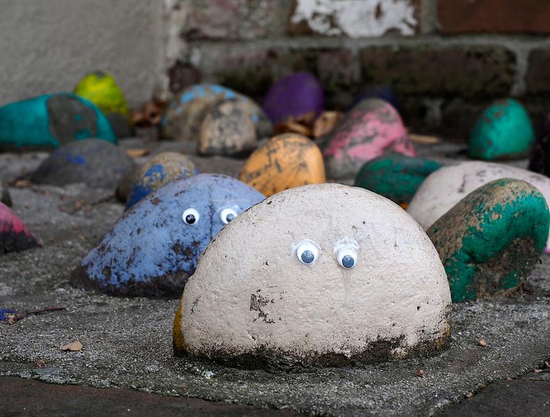 Pet rocks 2.jpg