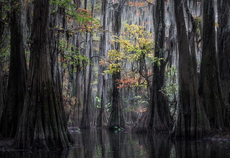 Cypress_Swamps_1117_PSokol-1384-Edit.jpg