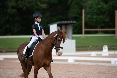 Horse 394