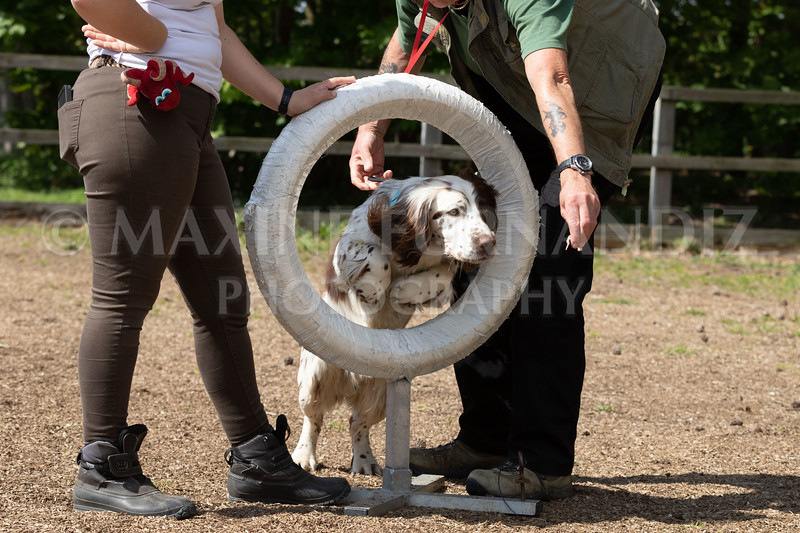 Dogs-8067.jpg