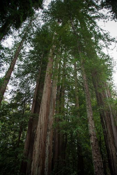 Redwood-46.jpg